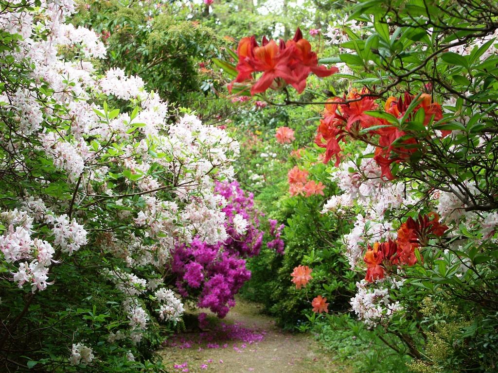 loisirs-villeneuve-arboretum_de_balaine2