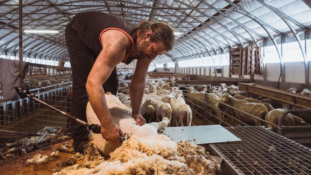 La Ferme Flouka, producteur de laine Mérinos dans Le Dévoluy - © Jérémie De Colleter