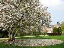 loisirs-villeneuve-arboretum_de_balaine4