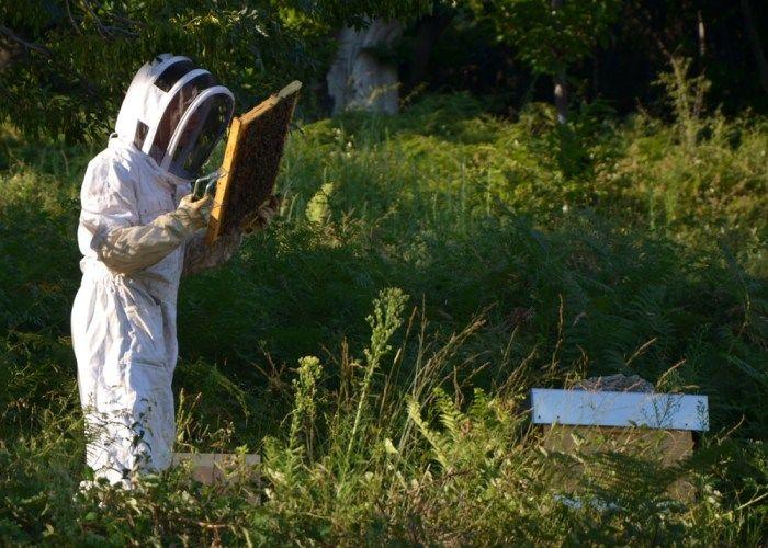 Visite de la miellerie du Berger des Abeilles - Montselgues