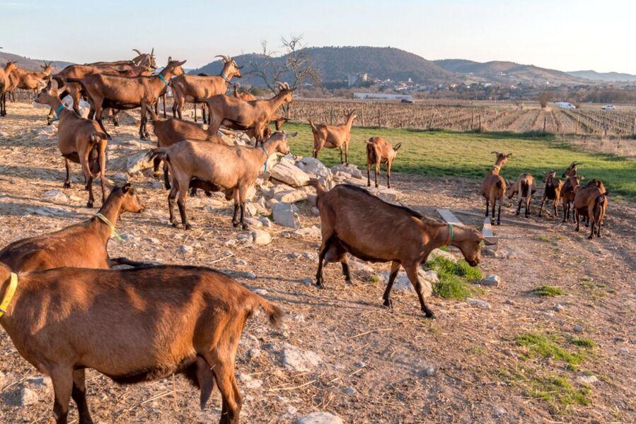 Sortie à la ferme - Alba-la-Romaine
