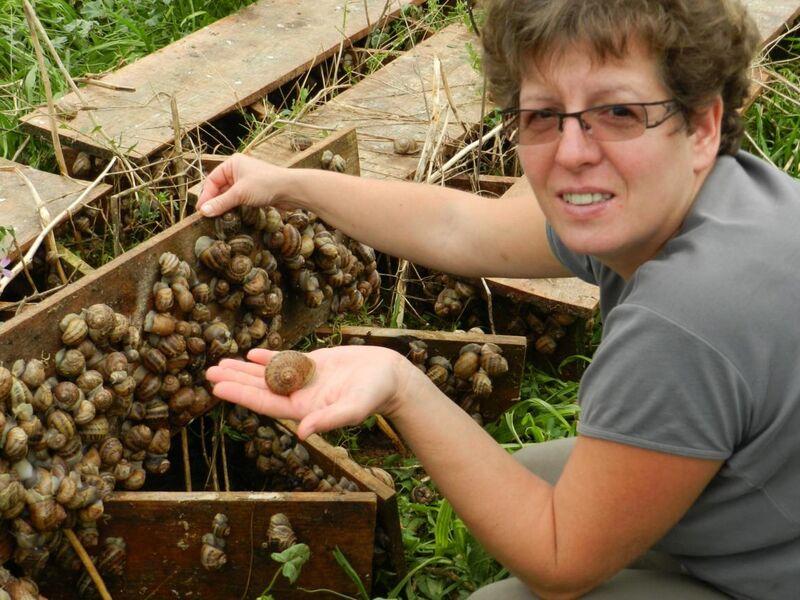 Visite de la ferme d'Escargots des Restanques - Saint-Remèze