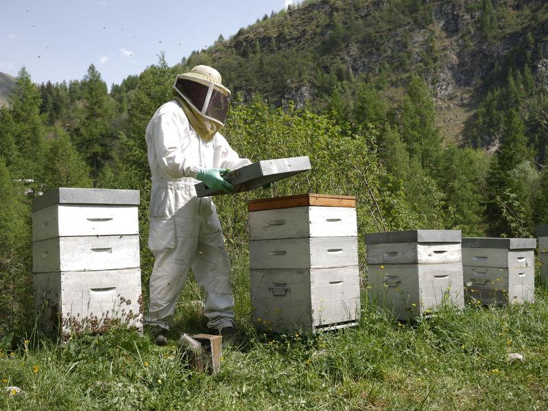 Les abeilles de Luc - Luc Marchand - © Les abeilles de Luc - Luc Marchand
