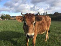 Ferme de la Passiflore - Rocles Vache Aubrac Ⓒ Ferme de la Passiflore - Rocles - 2019