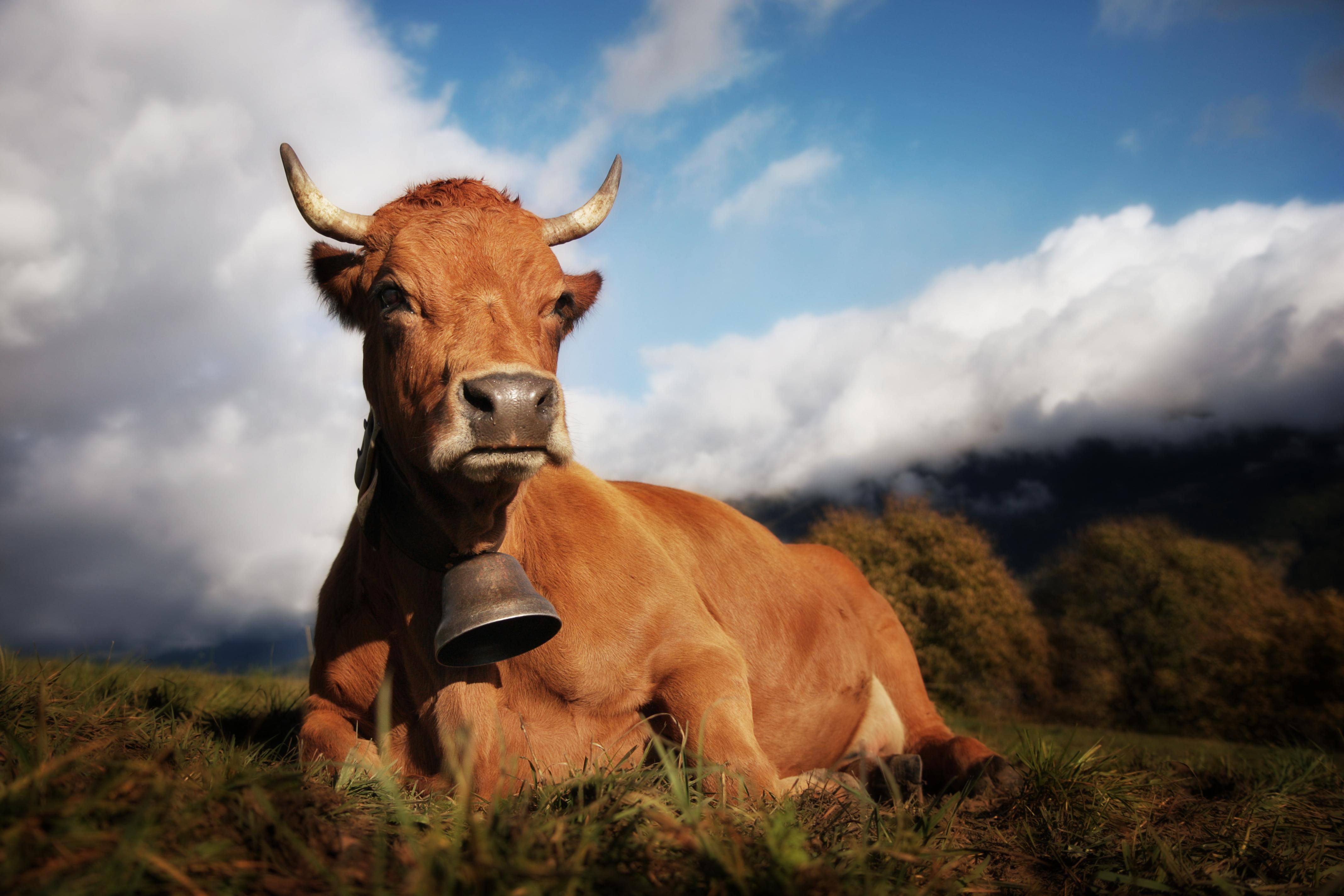 Comice agricole du  Beaufortain