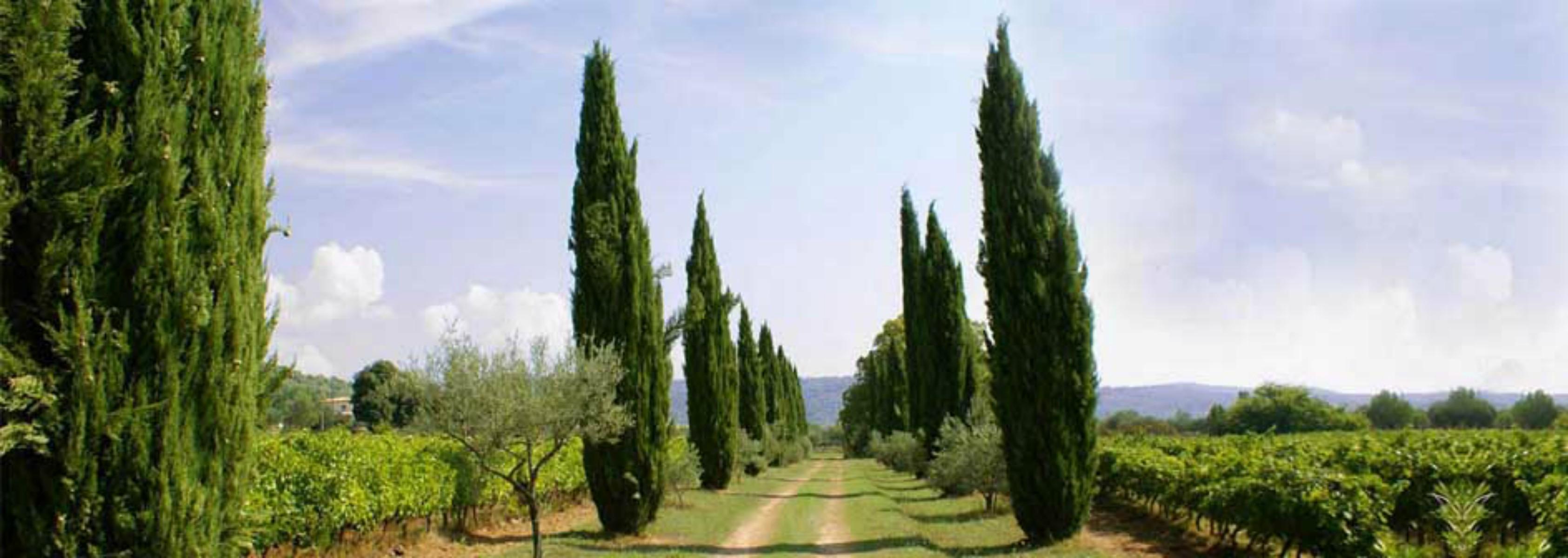 Domaine de Valcolombe