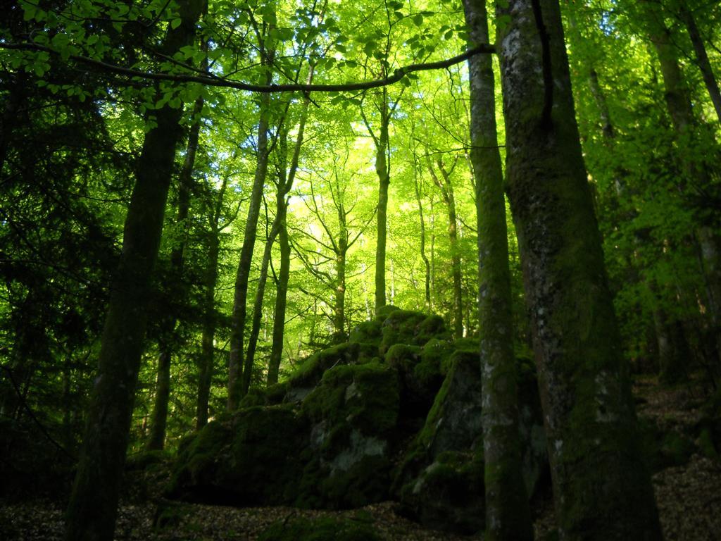 Sentier pédagogique - La Chabanne Forêt Ⓒ Monique de Wys