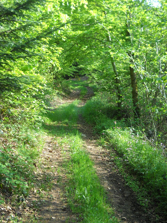 Sentier pédagogique - La Chabanne Sentier en forêt Ⓒ Mairie La Chabanne