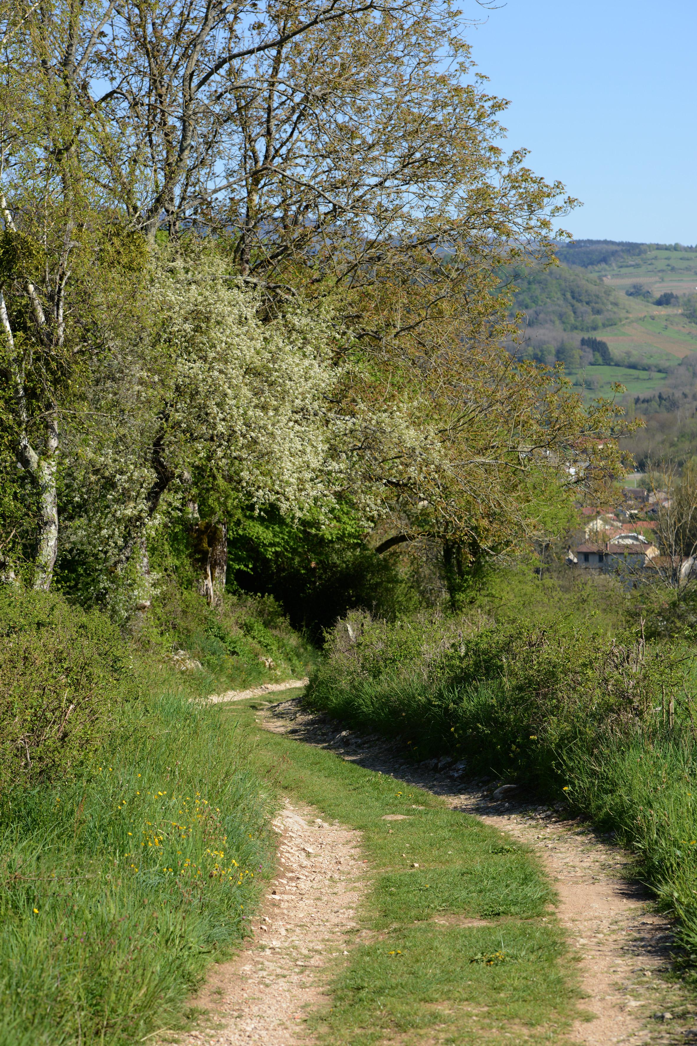 Sentier Poncin - Neuville-sur-Ain