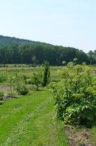 Les Ateliers de la Grange Sentier botanique Ⓒ Les Ateliers de la Grange - 2014