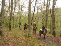 Centre équestre Les Verts randonnée en forêt Ⓒ S. Westermann