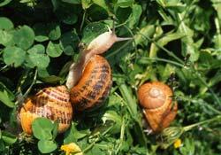 Des escargots à gogo Escargots Ⓒ Des escargots à gogo