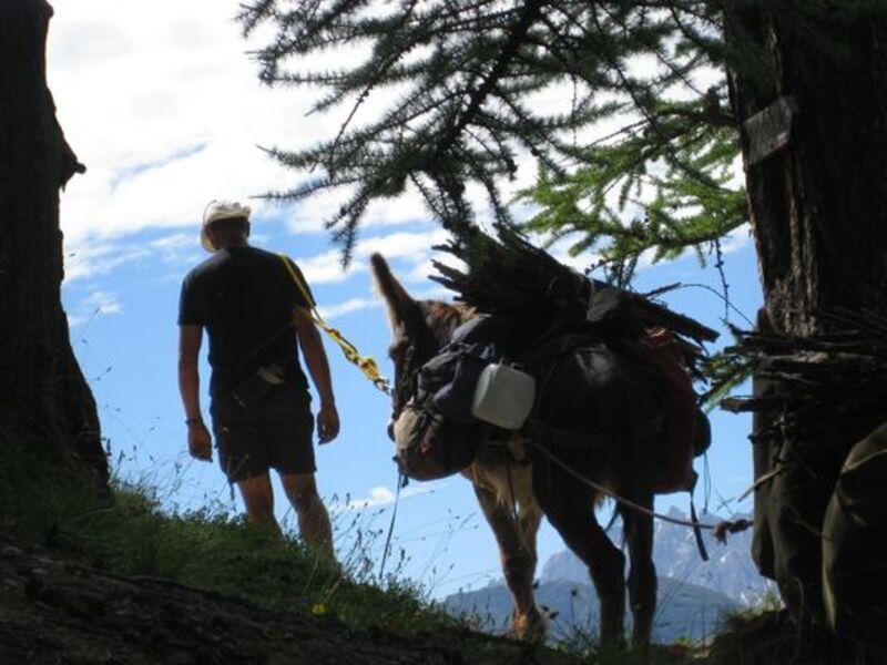Accompagnateur randonnée ânes Ceillac - © Claude Francois
