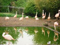 Parc-aux-oiseaux-CRivolly