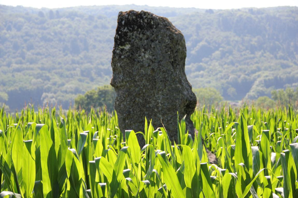 Menhir de Pierre Fiche - Simandre/Suran