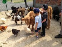 Domaine de la Ganne Contact avec les animaux Ⓒ Domaine de la Ganne