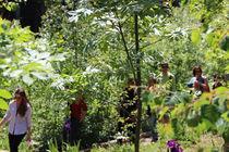 groupe arboretum