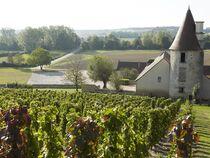 Conservatoire des anciens cépages Vue sur les vignes Ⓒ Conservatoire des anciens cépages