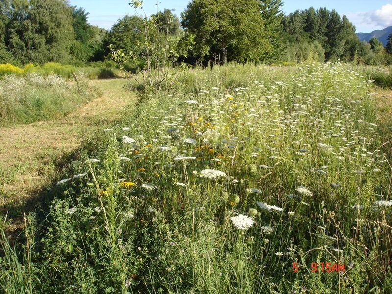 Découvertes - Le jardin vagabond