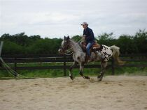 Country Pony ranch Cours Ⓒ Country Pony Ranch - 2014