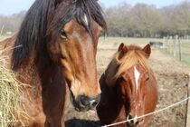 De Ferme en Ferme : Les Cavaliers d'Epona