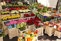 Marché aux fleurs et plants de légumes - Saint-Victor