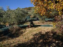 Visite du Domaine Oléicole Pontet Fronzèle - Lagorce