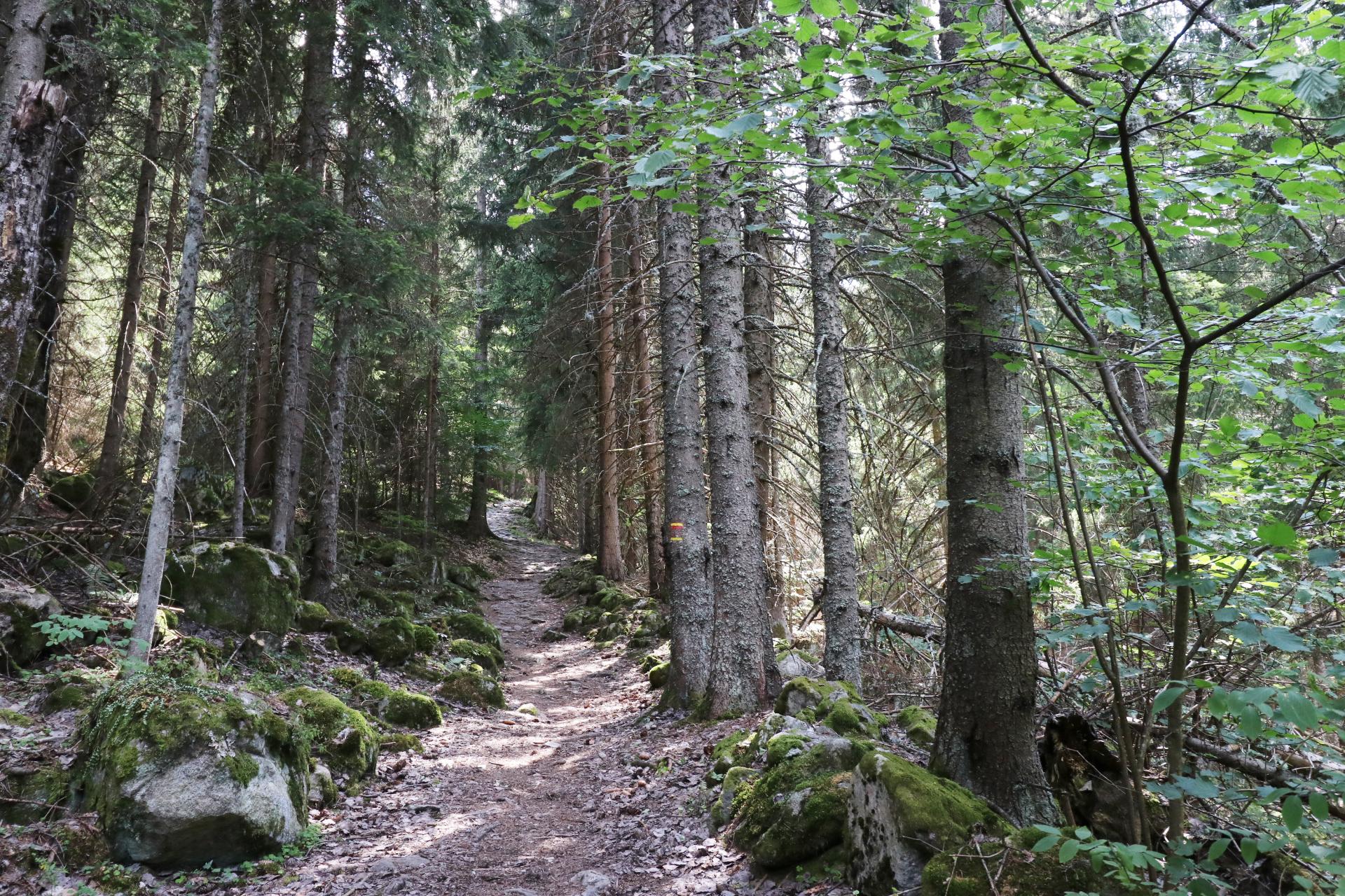 Sentier en forêt autour d'Oz-en-Oisans