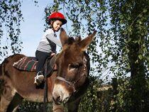 Âmes d'ânes - Accompagnateur de randonnées Ⓒ M. TABUTIN