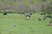 Visite de la ferme de Réat - Les visites chez nos producteurs - Saint-Victor