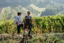 Fascinant week-end en Ardèche, d'Hermitage en St Joseph, de Cornas en St Péray et Sud Ardèche - Tournon-sur-Rhône