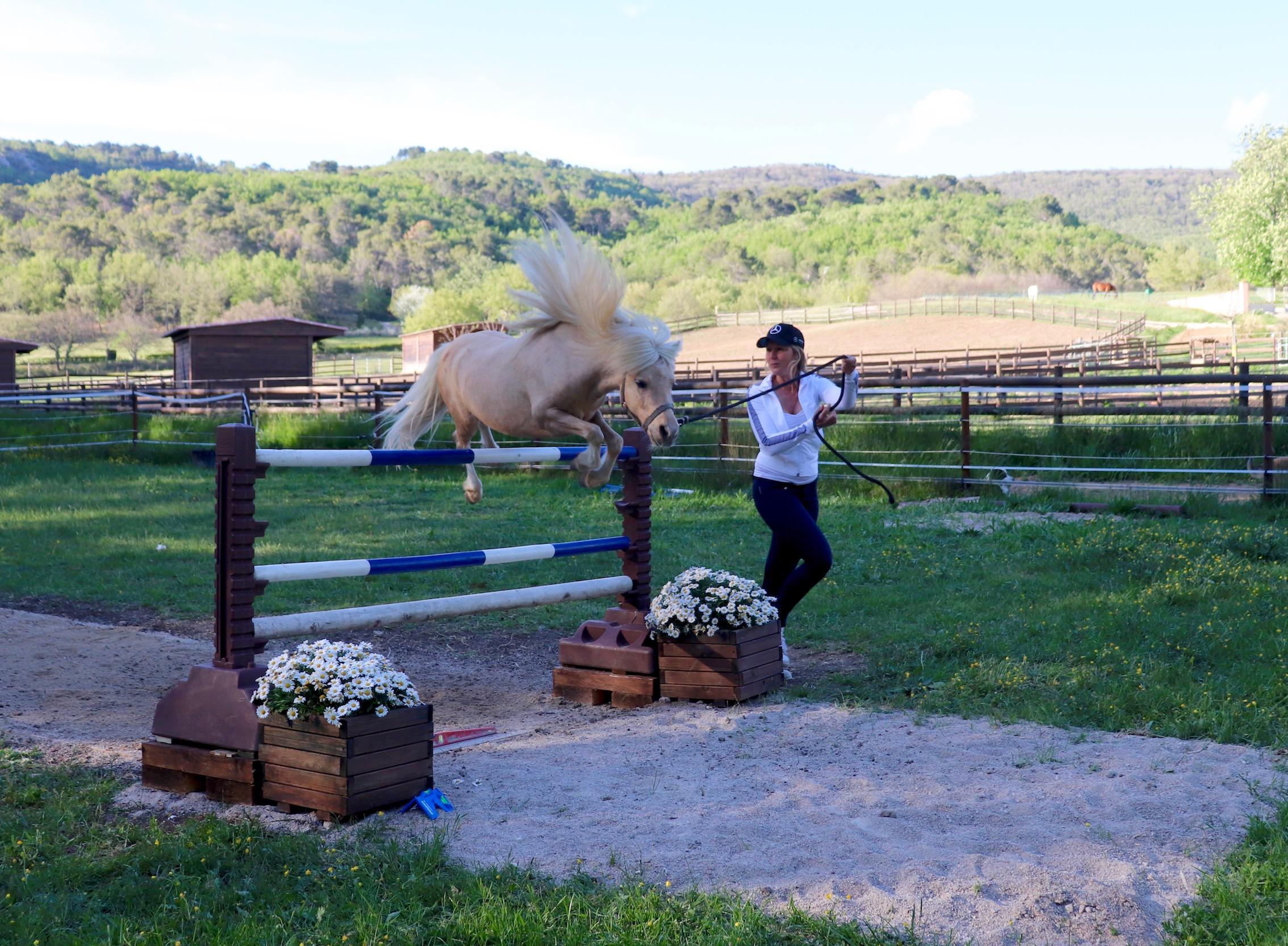 Rhéa Horses