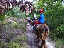 Âmes d'ânes - Accompagnateur de randonnées