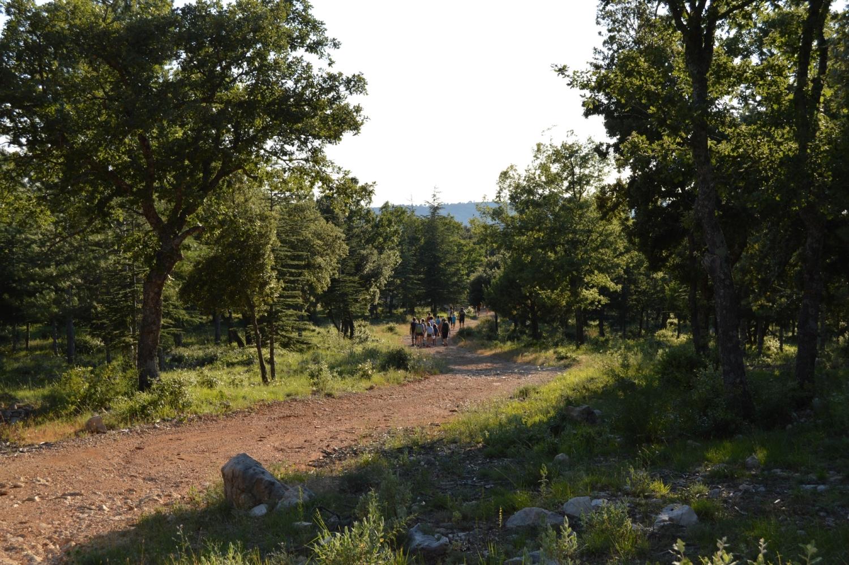 Randonnée pédestre - Draguignan - Sentier des Cèdres