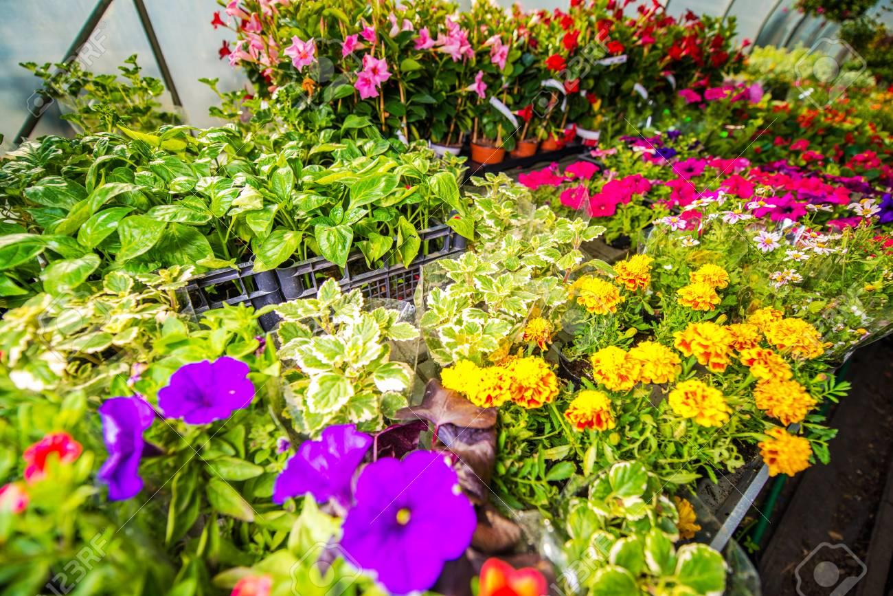 Vente de fleurs, plantes et plants