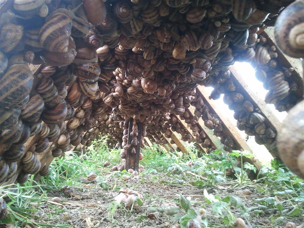 Via l'Escargot Parc à escargots Ⓒ vial mickael
