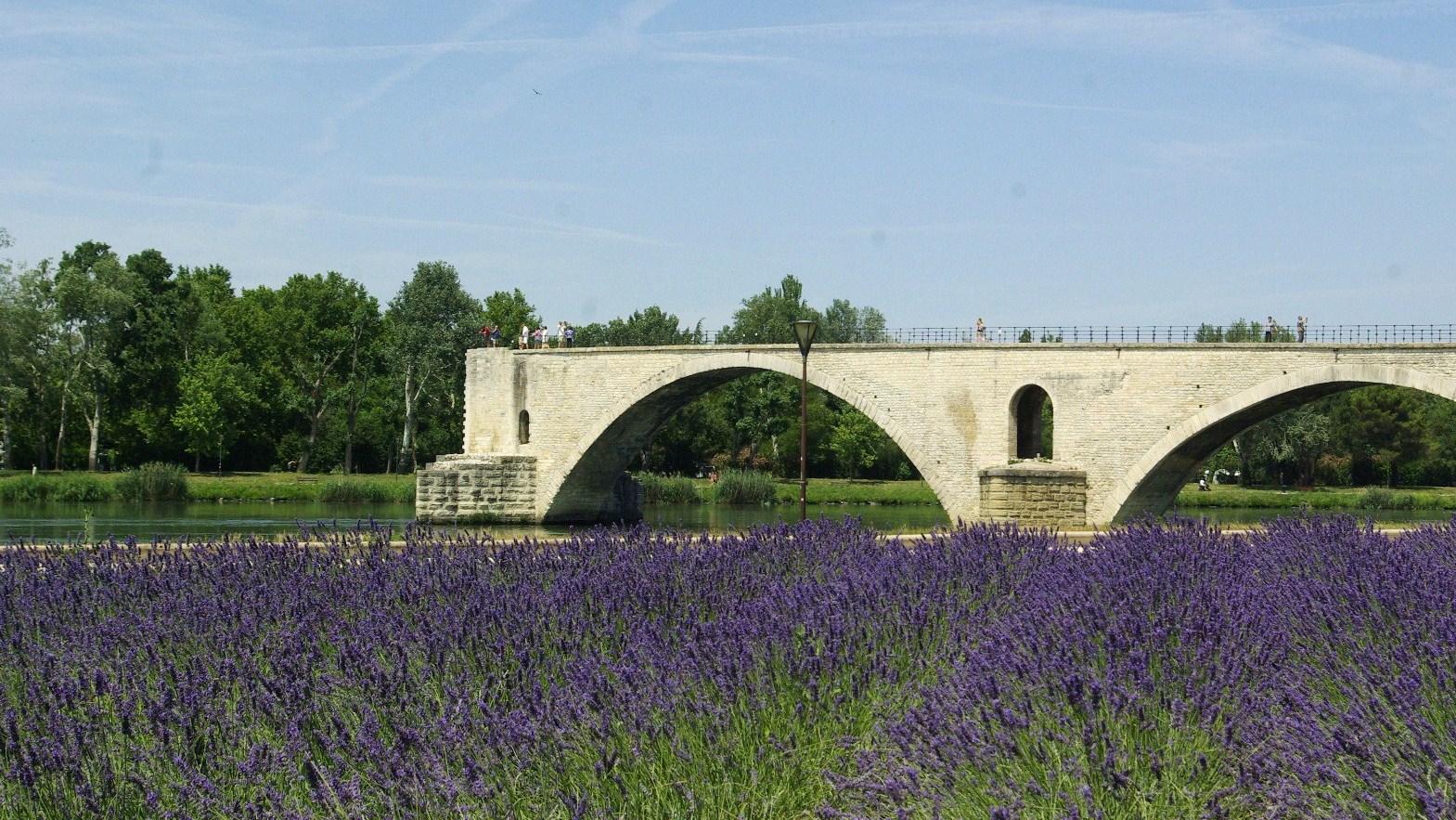 Lavandes au pied du Pont d'Avignon
