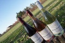 Domaine de la Chenaie Vins Ⓒ Domaine de la Chenaie
