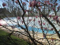 La piscine près du magniolias  Ⓒ Gîtes de France