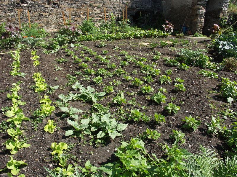 Rendez-vous aux Jardins - � Service du Patrimoine Ville de Briançon