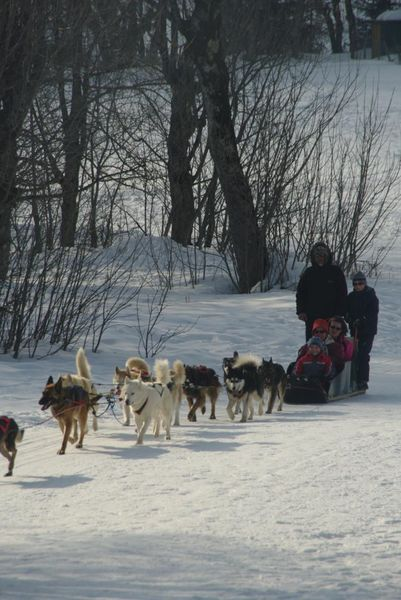 Sled dog outings