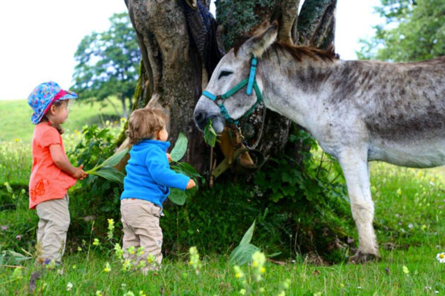 Des jeunes enfants donnant de lherbe à un âne dans le parc