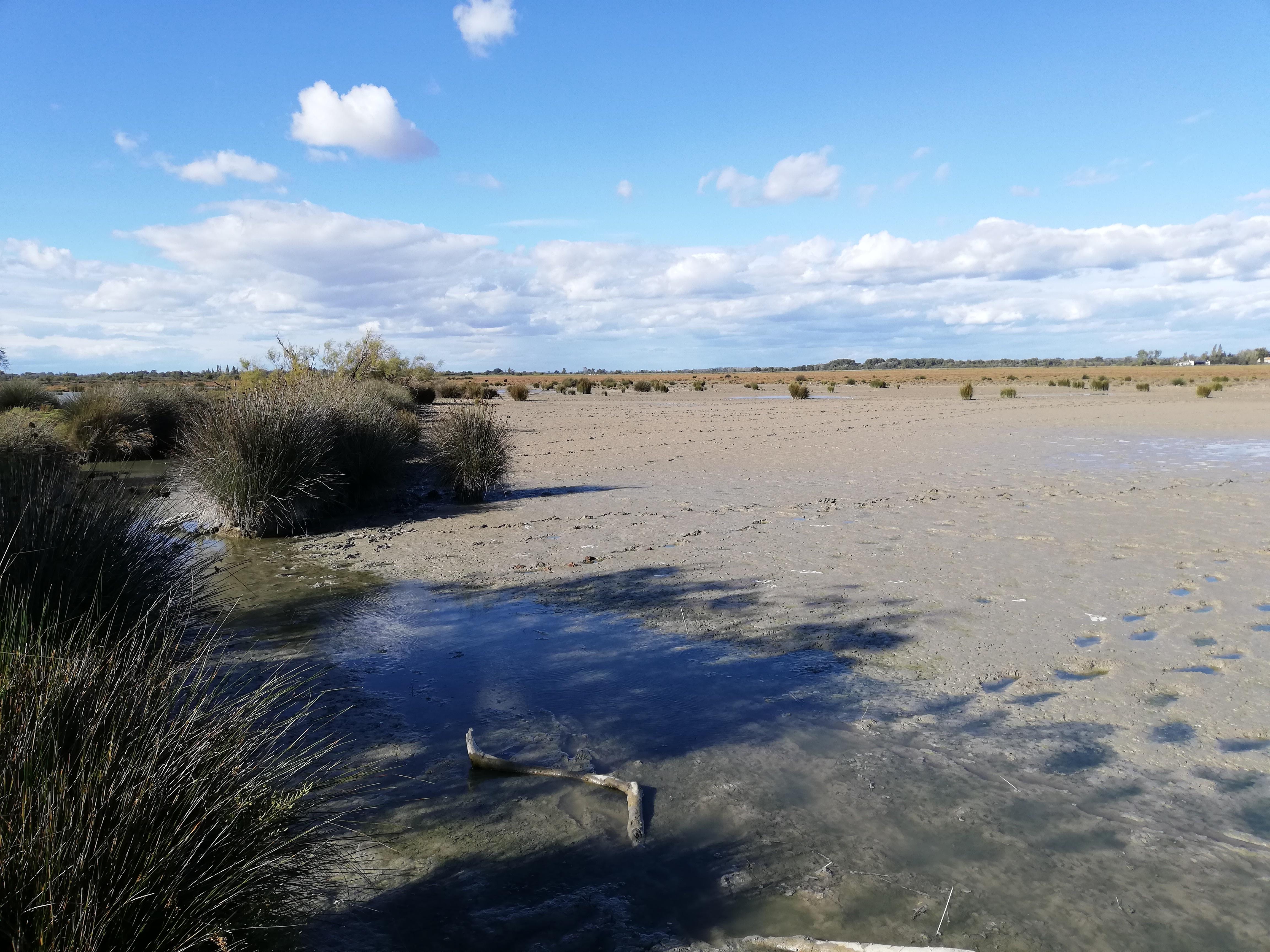 sortie-nature---habitats-de-moyenne-camargue-elevage-et-traditions