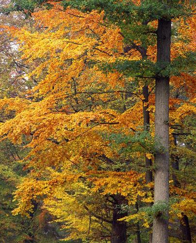 Forêt Domaniale de Crécy-la-Chapelle
