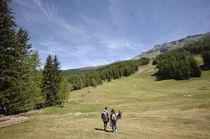 Plateau de Plan Bois