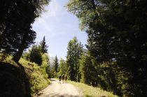 Chemin forestier vers Plan Bois