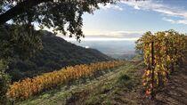 Balades en vignobles : Domaine du Coulet - Saint-Péray