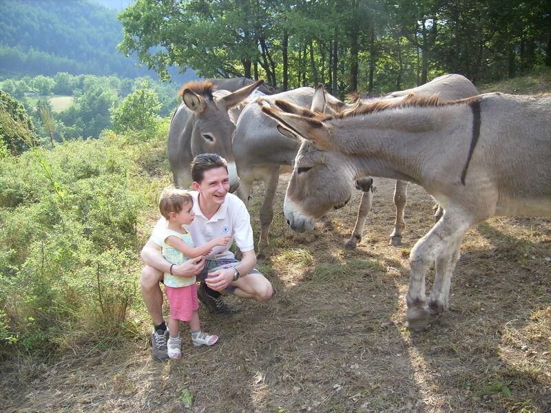 Les ânes du Verdon
