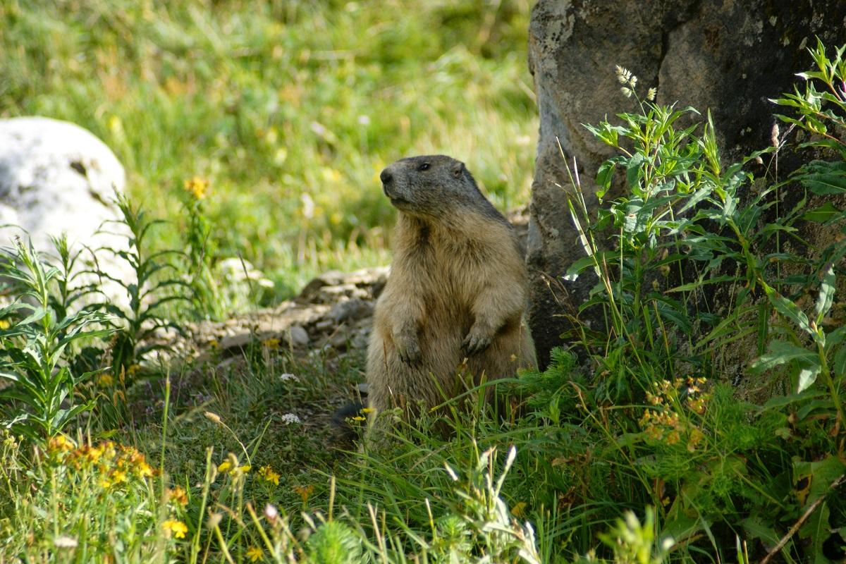 Randonnée Les Burons et Marmottes des sources de la Jordanne