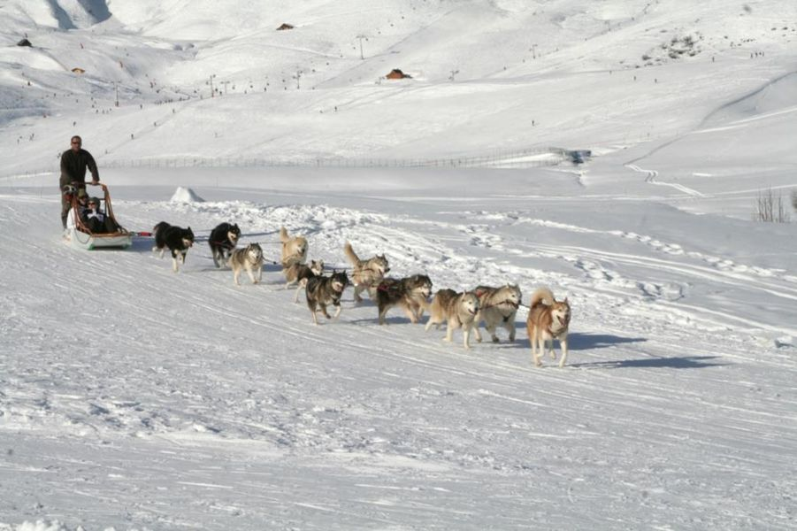 Dog sledging in winter